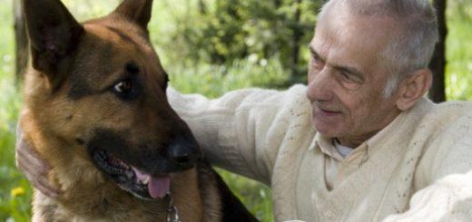 Передаются ли глисты от собаки к человеку?