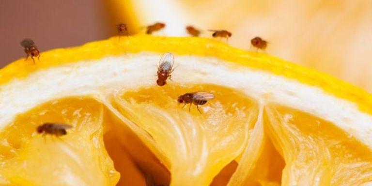 Мошки сидят на апельсине