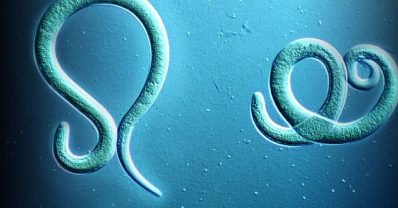 как выгнать паразитов из организма народными средствами