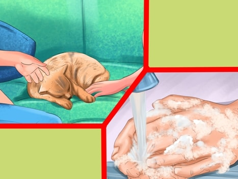 заразиться паразитами от человека человеку