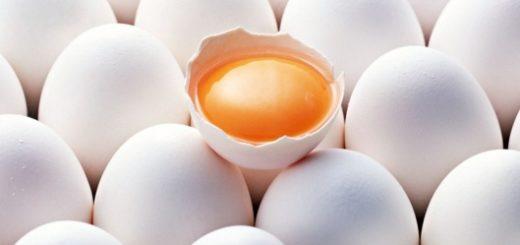 Есть ли в яйцах сальмонелла?